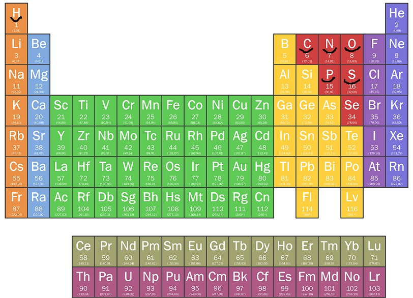 Periodic Table With The 6 Most Critical Elements For Life Underlined Image Public